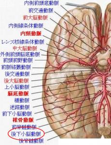 脳血管解剖