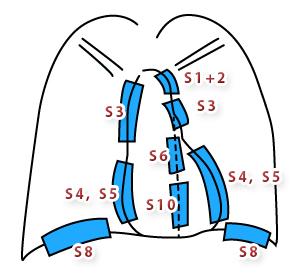 胸部レントゲンでみるシルエットサインと肺区域
