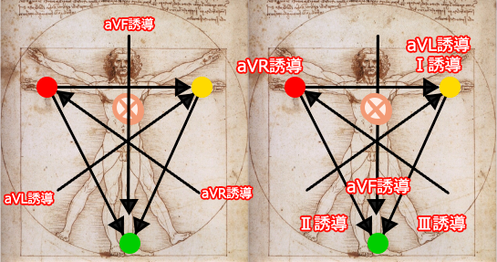 心電図12誘導の基本・四肢誘導